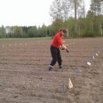 Havaintoruutujen lannoitusta. Kuva: Jatta Paajanen