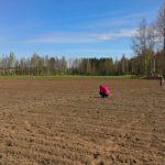 Tähän kohtaan peltoa se kokeilu tulee. Kuva: Riitta Savikko.