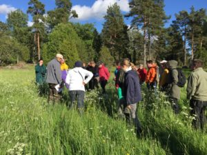 Mehiläiskasvikävelyyn osallistujia kierroksella. Kuva: Sakari Raiskio.