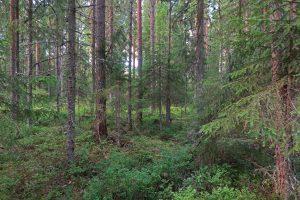 kuva: Hannu Nousiainen.