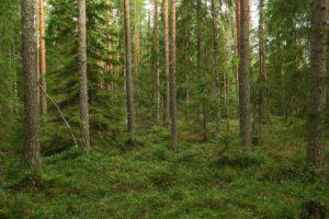 kuva: Hannu Nousiainen