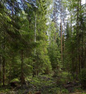kuva: Markku Saarinen