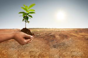 Esimerkiksi maaperän heikkeneminen vähentää lajien elinmahdollisuuksia. Kuva: iStock / IPBES.